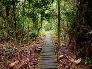 Boardwalk through the jungle in Bako National Park, Borneo, Malaysia