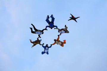 Skydive animal formation