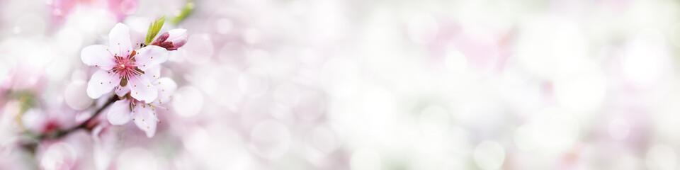Peach Blossom, Spring Background