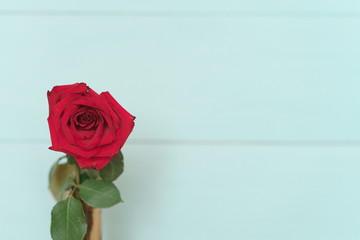 Rose on a wooden background