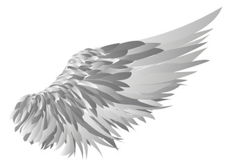 Wings. Vector illustration on white background. silhouette