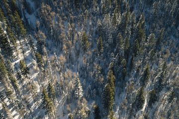 High angle view of pine trees on snow covered field in forest
