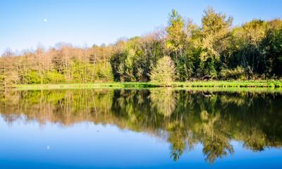 Printemps au bord de l'étang de pêche