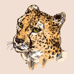 hand-drawn illustration  cheetah