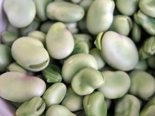 Dicke Bohnen, Ackerbohnen