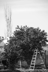 Trees and A Ladder