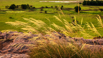 Golden grasses over the floodplains at the beginning of the dry season in Kakadu National Park, Northern territory, Australia.