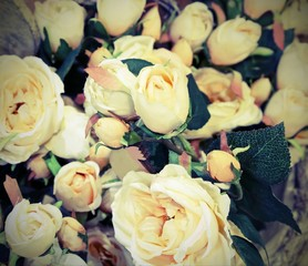 many old white roses with vitange effects