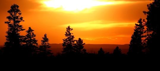Traumhafter Sonnenuntergang in Waldlandschaft