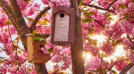 Vogelhaus und japanische Kirschblüte im Frühling