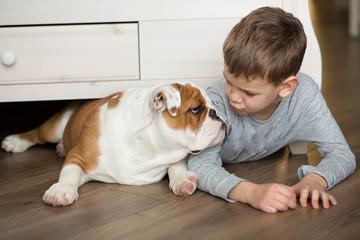 Cute boy playing with english bulldog.