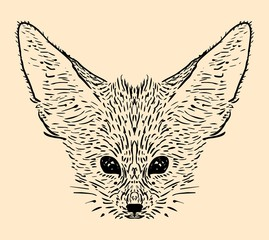 Fennec fox hand drawn illustration