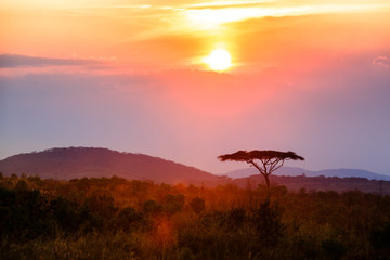 Photo sur Plexiglas Marron chocolat Sunset in Nyika National Park - Malawi