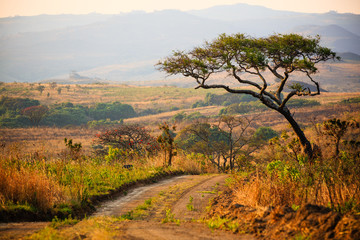 Landscape in Nyika National Park - Malawi