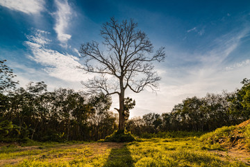 Dramatic tree on sunset