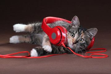 Cute kitten with headphones on a brown background
