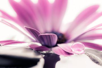kwiat i upuść