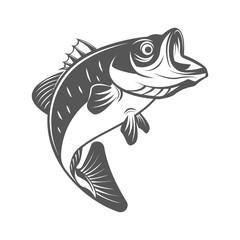 Bass fish vector illustration in monochrome vintage style. Design elements for logo, label, emblem.