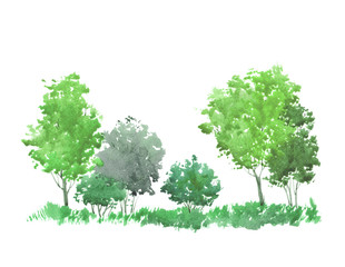 Green forest. Watercolor illustration. Background.