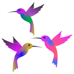 Hummingbirds vector  illustration