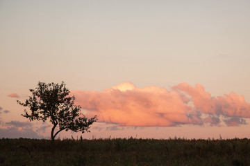 Evening landscape. Evening sky with pink clouds. Lonely tree in the sky