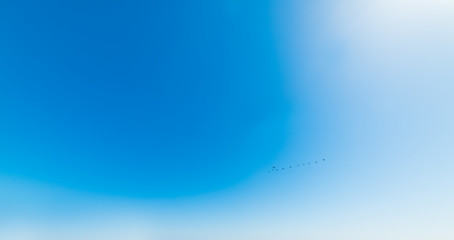 Birds flying under a shining sun