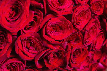 Big beautiful bouquet of red roses. Texture colors. A gift for a wedding, birthday, Valentine's Day.