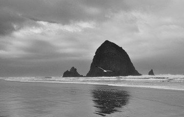 Haystack Rock | Fly Away | Black and White