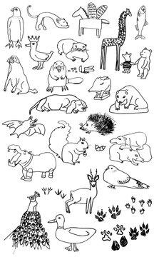 animals ilustration set