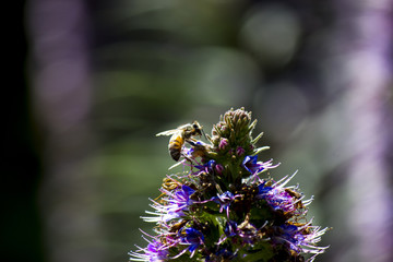 Purple flower with close up of bee