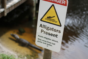 Panneau alligators present