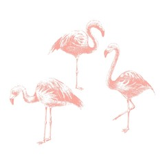 Canvas Prints Hand drawn flamingoes