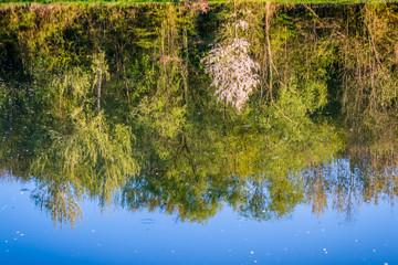 Reflet au printemps au bord de l'étang de pêche