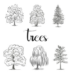 Trees sketch set, graphic forest vector illustration art, silhouette elements black   hand drawing