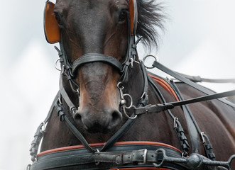Horse in carriage amunition