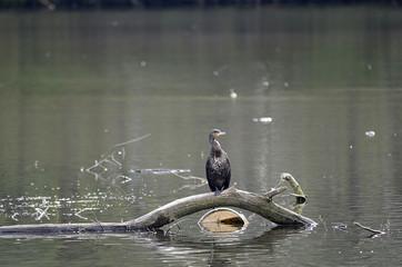 Gänse und Enten auf einem See