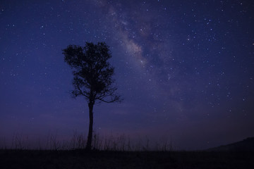 The Milky Way and some trees.