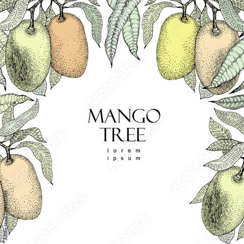 Mango Tree Vintage Design Template Botanical Fruit Frame Engraved Vector Ilration