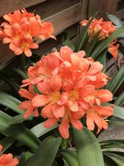 rote Blume in Nahaufnahme
