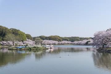 桜の剛の池