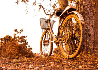 old bicycle style at summer near big tree, beautiful landscape with sunset