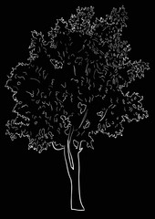 tree sketch isolated on black background