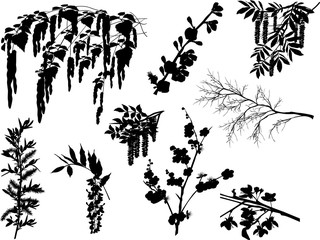 nine spring branches isolated on white