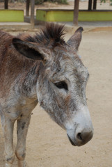 Donkey Sanctuary on the Carribean Island of Aruba