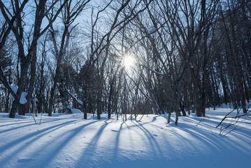 雪の中、青空と太陽を背景に立つ落葉した広葉樹