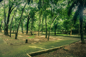 Beautiful green garden with pavement track surrounding by trees photo taken in Ragunan zoo Jakarta Indonesia