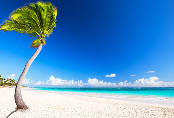 Beautiful tropical white beach and coconut palm trees
