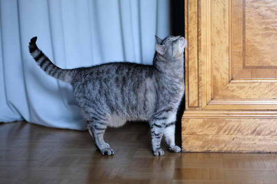 The domestic cat rubs against the corner of the closet in the room.