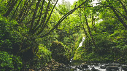 Lush Forrest and Waterfall into Stream