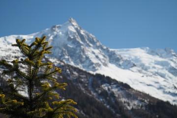 Mont-Blanc et Sapin